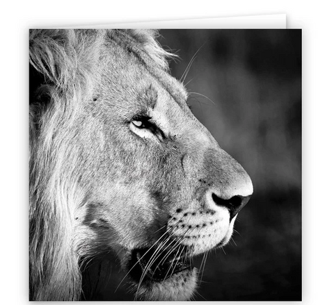 Large Greeting Card GC161 Lion