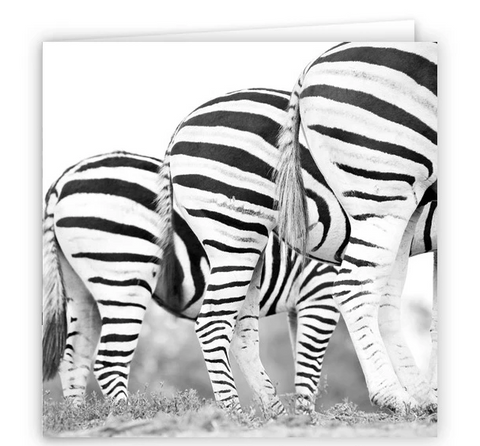 Large Greeting Card GC137 Zebra