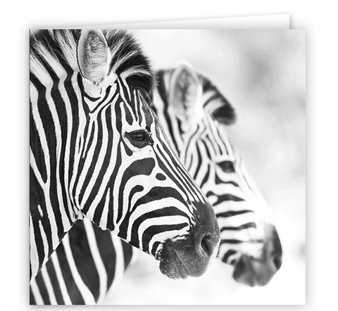 Large Greeting Card GC168 Zebra
