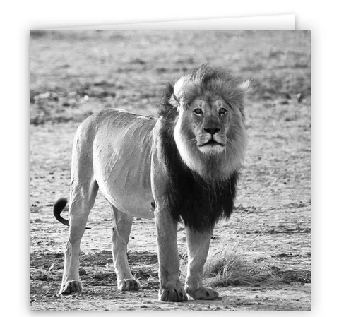 Large Greeting Card GC122 Lion