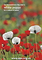 Wear a White Poppy (Postcards x5)