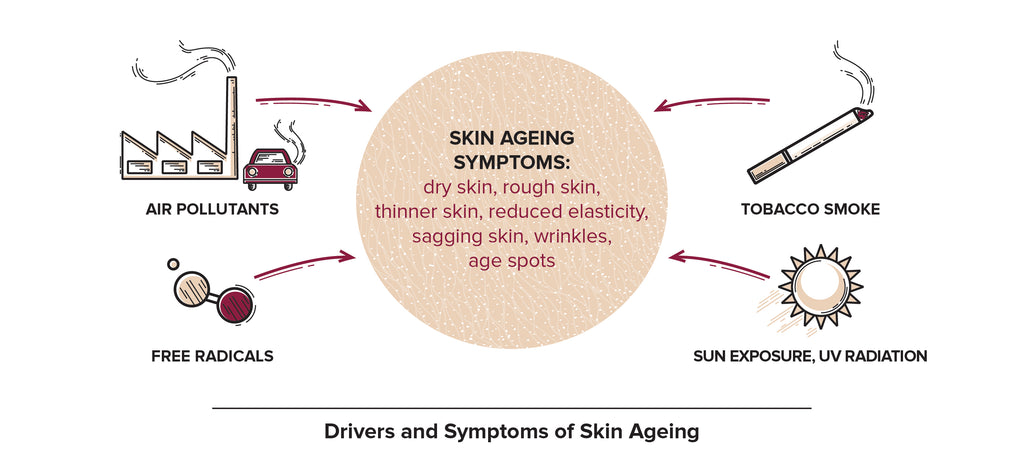 Causes of skin ageing