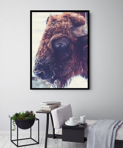 Buffalo Bruce | Canvas Art