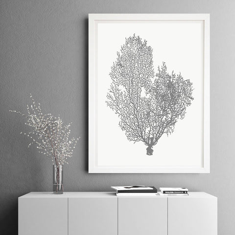 Natural Coral | Framed Art