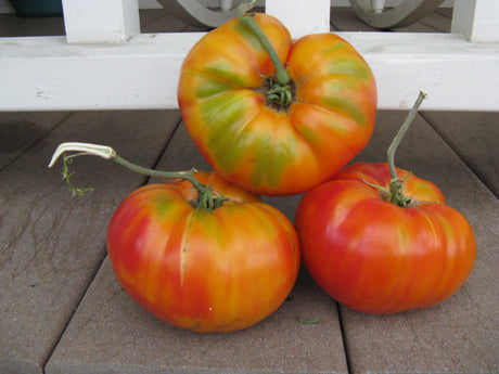Gold Medal Heirloom Tomato Seeds