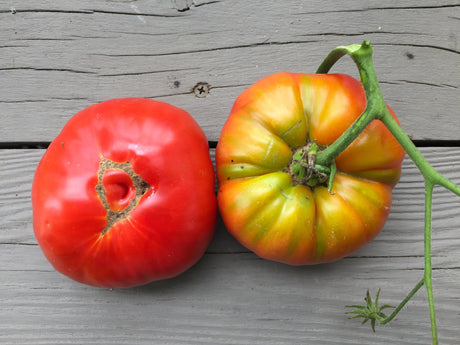 Soldacki Heirloom Tomato Seeds