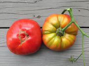 RidgeBridge Farm Medium Heirloom Tomato Collection