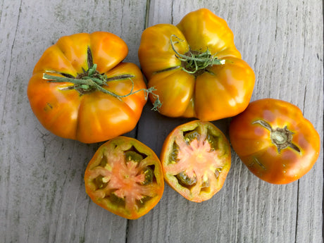 Thorburn's Terra Cotta Heirloom Tomato Seeds