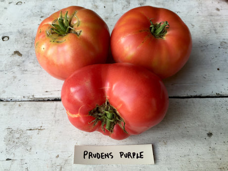 Prudens Purple Heirloom Tomato Seeds