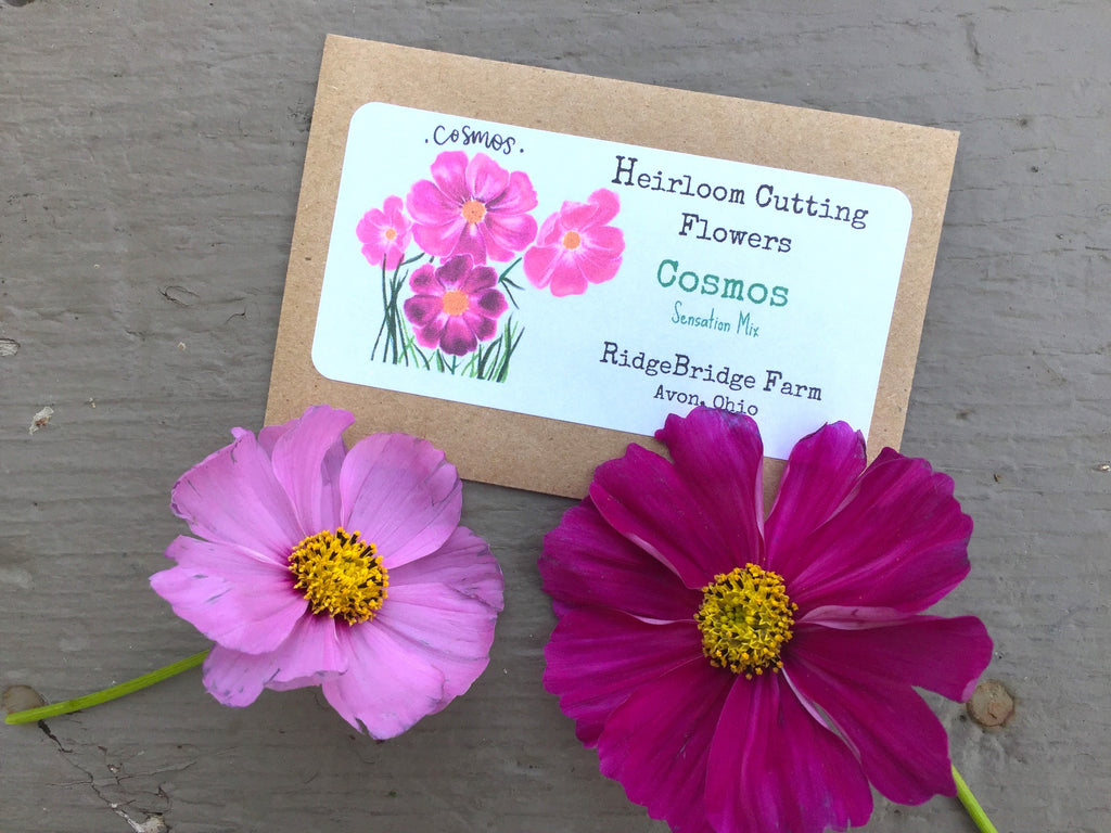 Cosmos Seed Packet