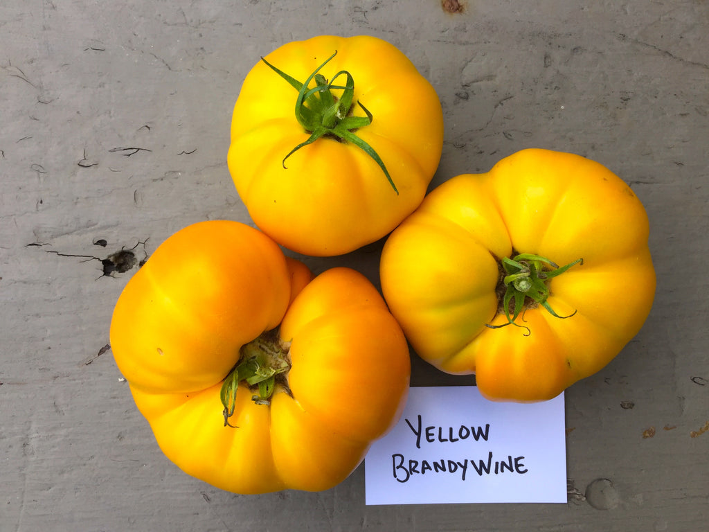 Yellow Brandywine Heirloom Tomato Seeds