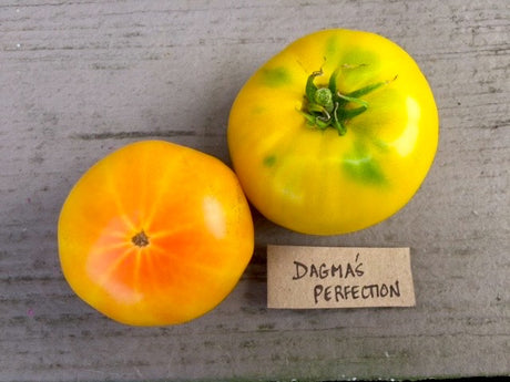 Dagma's Perfection Heirloom Tomato Seeds