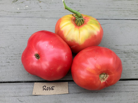 Rose Heirloom Tomato Seeds