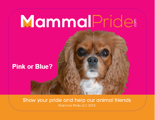 Mammal Pride Sticker - Pink or Blue?