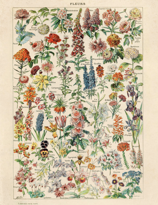 Vintage French Garden Botanical Chart