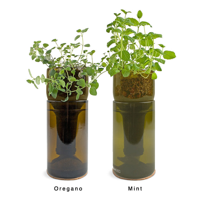 Grow Bottle