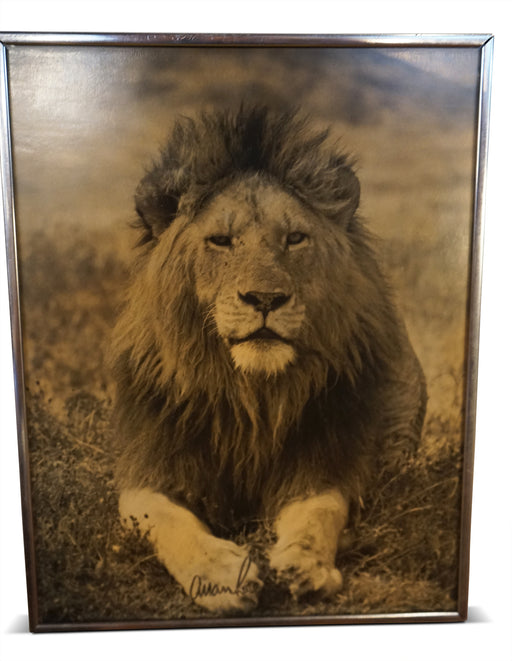 B+W Photograph of Lion