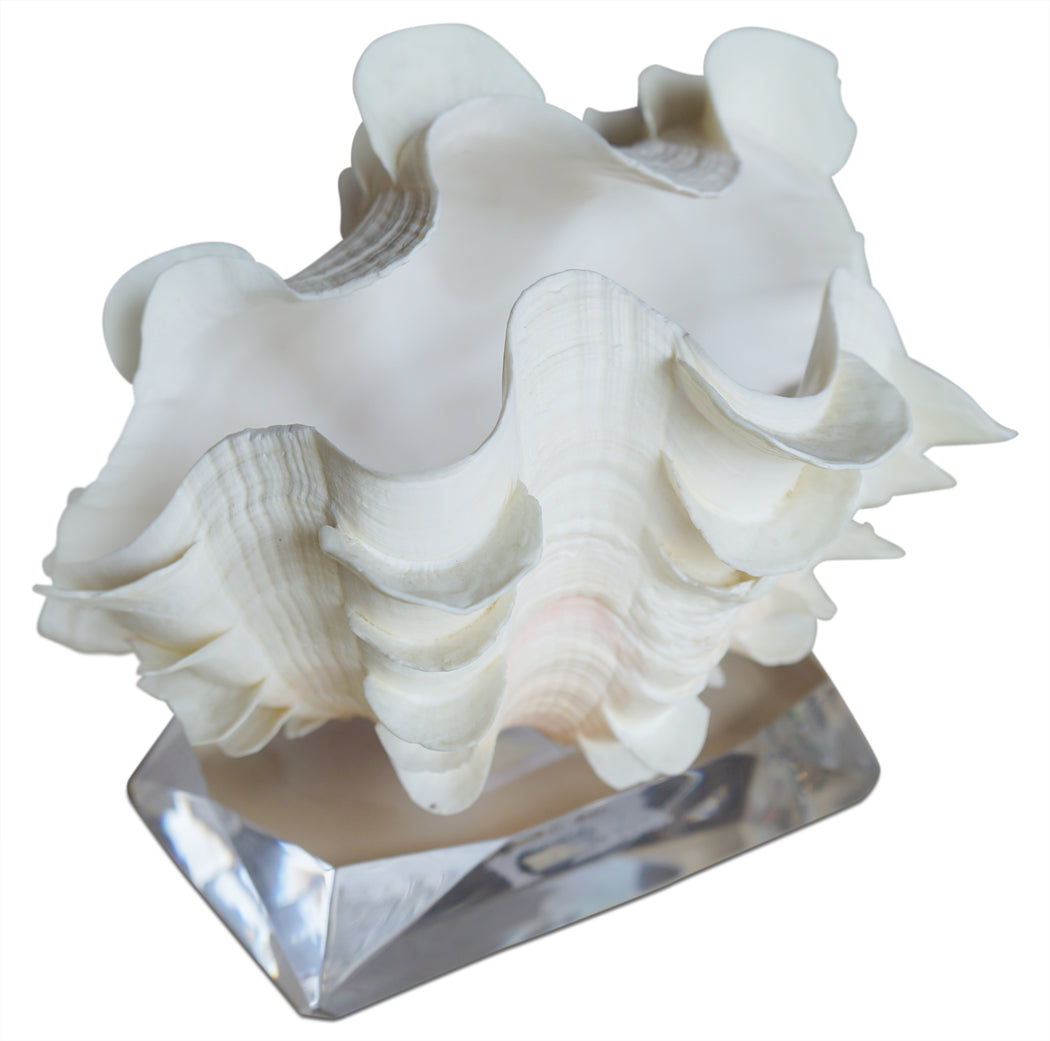 Seashell on Lucite Stand