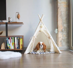 Cat and dog tepee