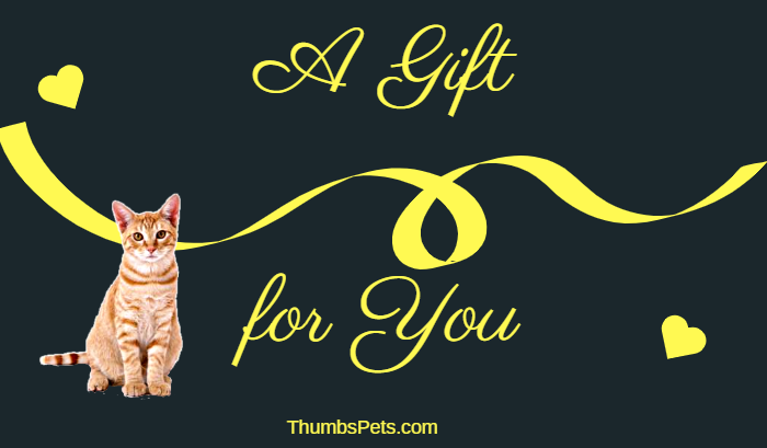 Gift Card - Gift Cards- Pets And Home Decor