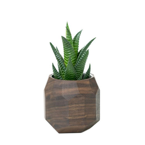 Gifts - Chiseled Wood Geometric Succulent Catnip Planter