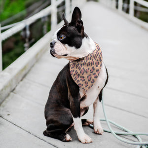 Pet Bandana - Pink Leopard Cat And Dog Bandana