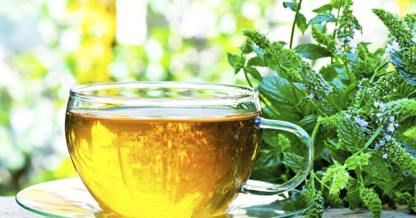 Studies Found These Natural Herbs Can Boost Memory & Mood