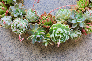 Living Succulent Wreaths - Tuesday 20th November 6-8pm