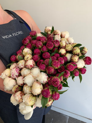 Peonies -  Bouquet or Vase Arrangement- for a limited time, while the season lasts!