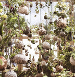 Creative Workshop - Christmas Tree Kokedama with Coraleigh Parker from Pickled Whimsey; Saturday 18th November 1pm-3pm