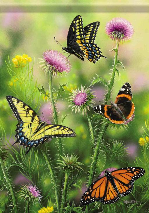 BUTTERFLIES & THISTLE