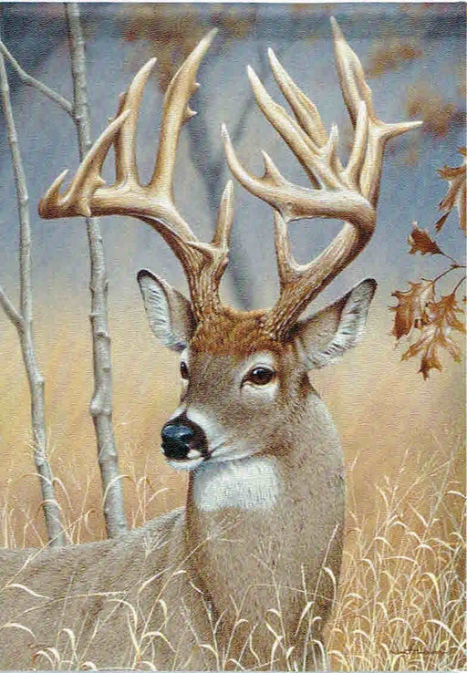 WONDERFUL WHITETAIL