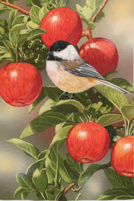 CHICKADEE ON APPLE TREE