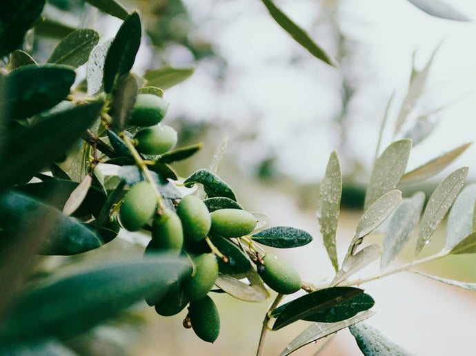 Introducing Taralinga Estate Extra Virgin Olive Oil