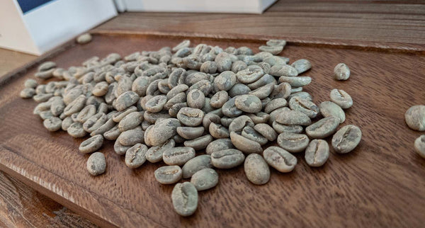 Guatemala Acatenango Gesha Whole Beans Fresh - Regent Coffee Roaster Glendale California