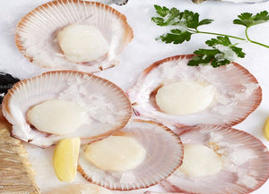 Scallops 1/2 shell Hervey Bay