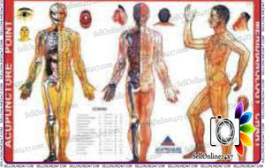 Meridianology Chart for Educational Academics Teaching Sujok Acupressure