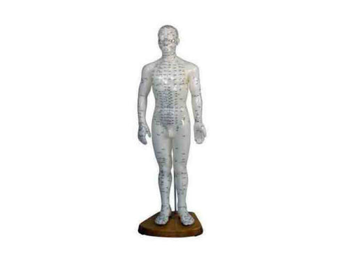Acu. Male Full Body Model -With Booklet-Professional Educational Teaching