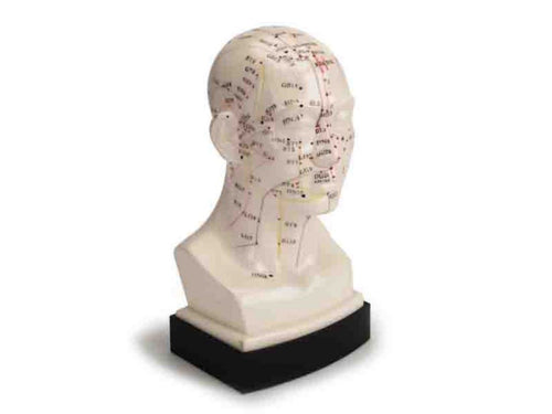 Human Head Acupuncture Model Educational Teaching