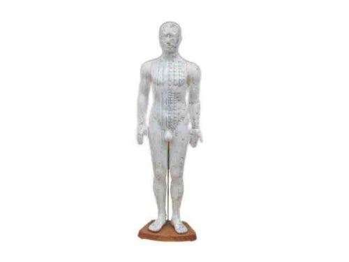 Medical Educational Teaching Male Body Acupuncture Male Full Body
