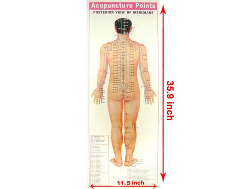New Set Of 4 Acupuncture Therapy Points Chart- Academics Teaching Educational