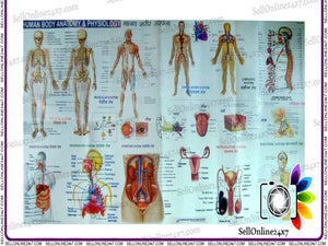 Brand New Complete Human Body Acupuncture Points And Meridians Chart
