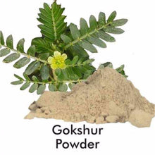 Ayurvedic Herbal Hills Gokshur Powder -100Gm For Supports Healthy Digestion