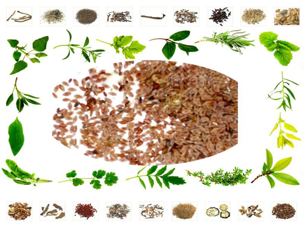 100% Raw Herbal Plantago Psyllium Ispaghula Isabgol Isabgul Seeds Jadi Buti Ayurveda  Health Care Available at BuyIndianProducts24x7.com