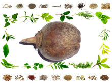 100% Pure and Natural Raw Herb Paras Pipal Phal Organic Ayurvedic Jadi Buti Available at BuyIndianProducts24x7.com