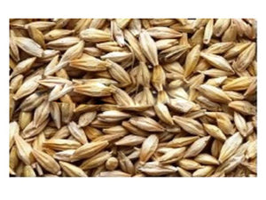100% Organic Pure And Natural Raw Herb Jau seeds - Barley Grass Seeds Ayurvedic Jadi Buti Available at BuyIndianProducts24x7.com