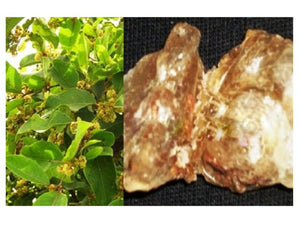 100% Organic Raw Herb Dhaura Gum - Dhavada Gond Pure And Natural Ayurvedic Jadi Buti Available at BuyIndianProducts24x7.com