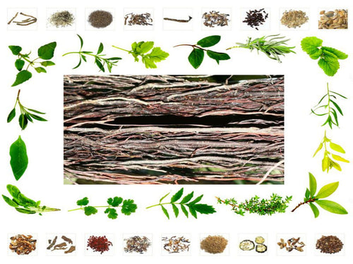 100% Organic Raw Herb Peepal Jata - Pimpal Jata - Ficus Religiosa Pure And Natural Ayurvedic Jadi Buti Available at BuyIndianProducts24x7.com