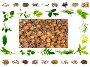 100% Organic Raw Herb Nagkesar Fruit - Nageshwar - Mesua Ferrea Pure And Natural Ayurvedic Jadi Buti Available at BuyIndianProducts24x7.com