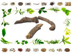100% Organic Raw Herb Chitrak Mool - Plumbago zeylanica Root Pure And Natural Ayurvedic Jadi Buti Available at BuyIndianProducts24x7.com